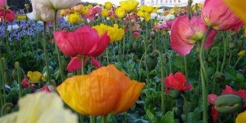 昆明世博园名花艺石园