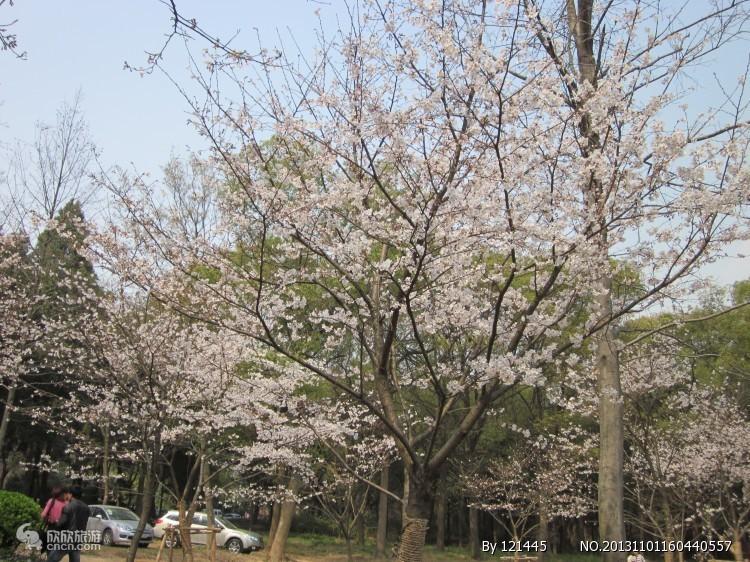 磨山樱花园
