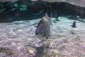 带孩子去的好地方 北京动物园海洋馆一日游 保定出发