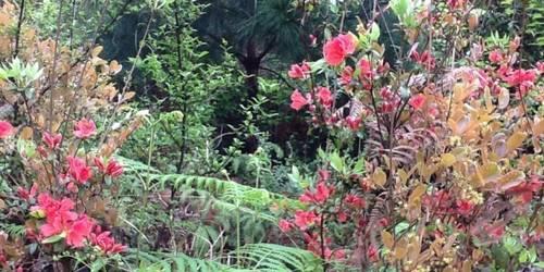茂兰国家级自然保护区