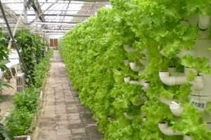 北戴河集发生态农业观光园
