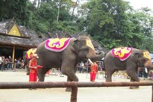 云南西双版纳大象