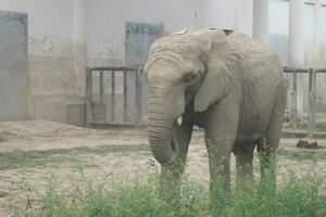 北京大兴野生动物园