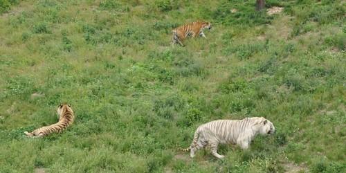 神雕野生动物保护区