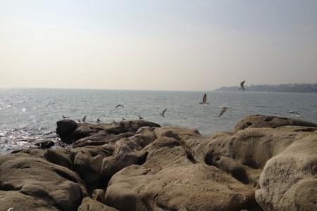 <天津本地一日游>张园、瓷房子、古文化街、塘沽外滩一日-滨海图书馆网红打卡地之旅