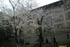 珞珈山―武汉大学