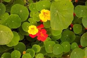 长沙到广州百万葵园 双高二日 游自由行-花海奇缘