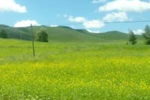 V1:丰宁坝上草原+神仙谷七彩森林+海留图湿地公园嘉年华30