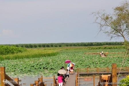 惠州出发到  广州南沙湿地公园、十九涌行摄一天