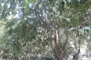 武汉洪山公园