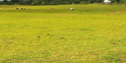 阿古拉草原