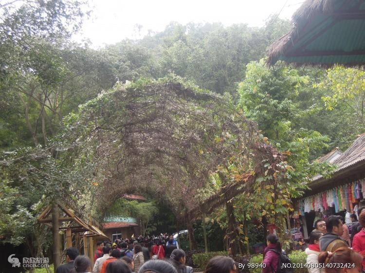 野象谷热带雨林景区一图片