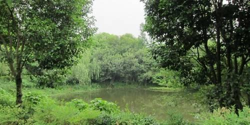 西溪湿地摇橹船