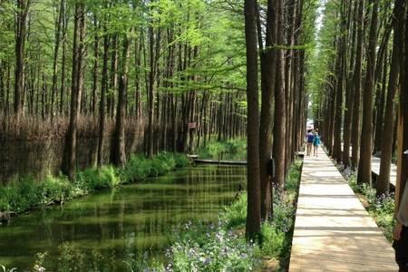 青島到李中水上森林公園、泰州古街、溱湖濕地跟團二日游