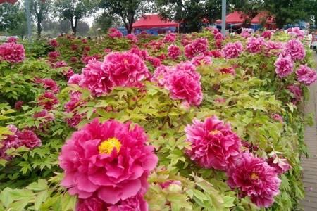 8天赏花品质空调旅游专列,广州往返