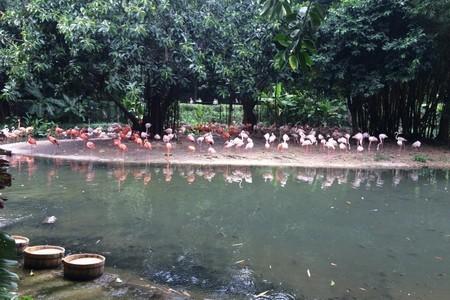 惠州出发到 广州长隆飞鸟乐园一日游