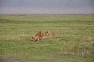 北京到肯尼亚旅游:野趣肯尼亚深度10日游