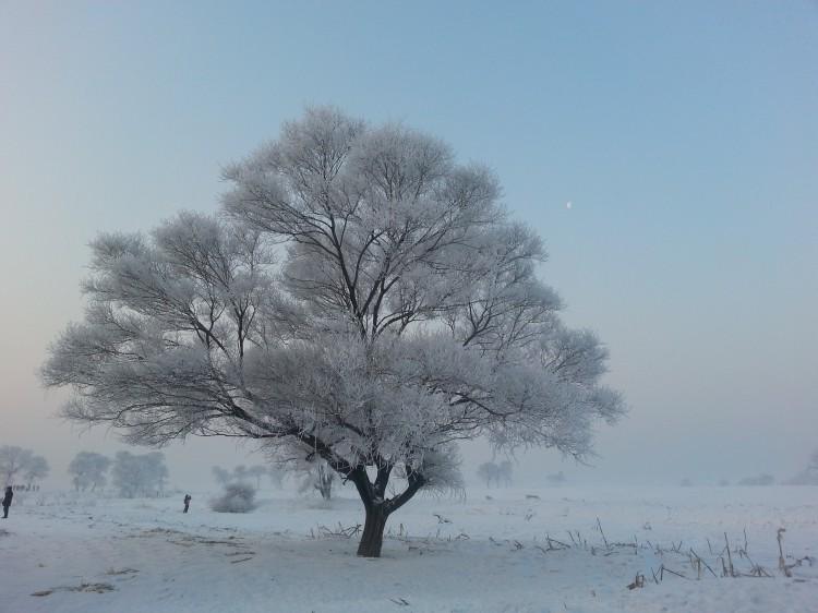 雾凇岛图片