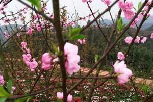 绿色环保团建方案<京东平谷植树+采摘草莓一日游,纯玩团>