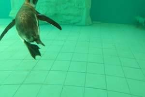 北京大兴野生动物园一日游纯玩北京一日游北京周边1日亲子游