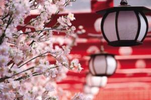 春节出游赏花泡汤备受青睐 厦门各类旅游线路新鲜出炉
