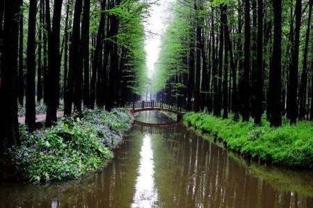 3月泰州旅游纯玩团:青岛到李中水上森林公园、泰州老街、梅园大巴2日游