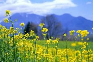 文化和旅游部给您一份春季假日旅游指南,请查收