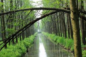 贵州到2020年将建成300个森林旅游景区