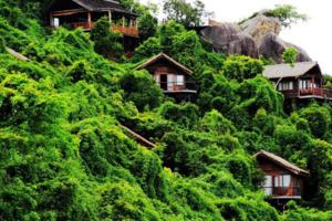 旅行社发力森林游个性产品开发是关键