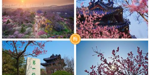 周末去哪儿玩南京扬州赏花3日游 瘦西湖、何园、梅花山、明孝陵