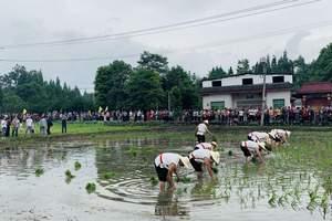 七里诗乡首届开秧门农耕文化节暨千人绿道徒步活动隆重举行