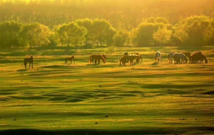 呼伦贝尔大草原6