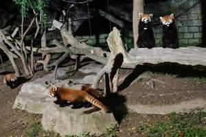 """""""夜经济""""扩容 动物园开夜场"""