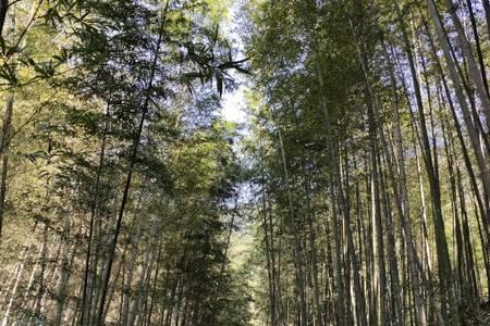 惠州出发到   从化乡村溪头村途步、增城1978电影小镇纯玩一天