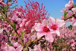 从北京到怀柔植树团建<怀柔雁栖湖参观+绿色环保植树一日游>