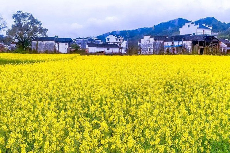 北京到江西庐山五日游_婺源油菜花,景德镇,庐山旅游多少钱?