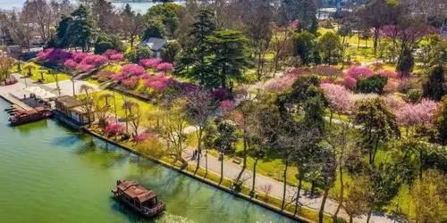 3月江南旅游纯玩团,青岛到南京梅花岭、玄武湖、夫子庙跟团2日游